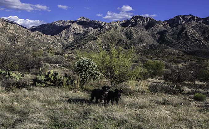 Debby & Faya im Catalina State Park in Tucson,  Arizona USA Foto: Christine Lisse