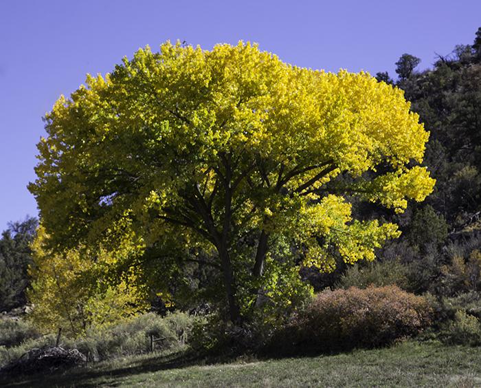 3 Baum