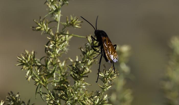 4 Insekt