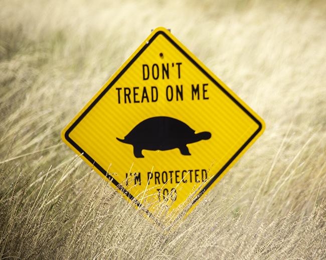 14a Schild Schildkröte